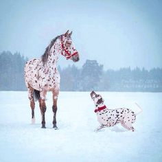 Canine- Equine Dopplegangers: 37 Horses that Have Matching Dogs! Horses And Dogs, Animals And Pets, Baby Animals, Dogs And Puppies, Funny Animals, Cute Animals, Horses In Snow, Nature Animals, Pretty Horses