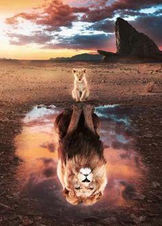Lion King Poster made out of metal. Inspiring image of The Lion King. Lion King Animals, Lion King Art, Lion Art, The Lion King, Tier Wallpaper, Cute Cat Wallpaper, Animal Wallpaper, Rainbow Wallpaper, Wallpaper Art