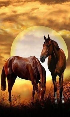 Welcome to my Workspace Beautiful Horse Pictures, Most Beautiful Animals, Beautiful Horses, Worlds Cutest Animals, Horse Wallpaper, Native American Pictures, Horse Posters, American Quarter Horse, Majestic Horse