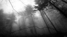 Brouillard dans la forêt mystique.