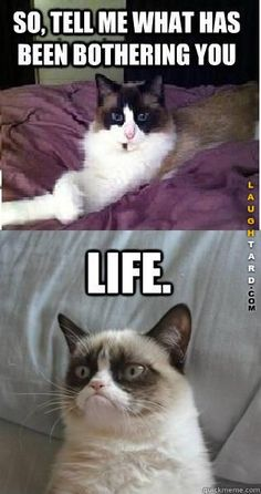 Life #lol #laughtard #lmao #funnypics #funnypictures #humor  #thegrumpycat
