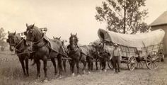 Photo Of A Conestoga Wagon Ca 1910
