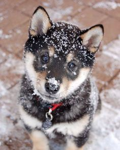 Adorable pup is charmed at the sight of the first snowflakes