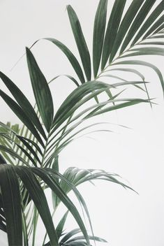 leaves – Best Garden Plants And Planting Palm Tree Leaves, Plant Leaves, Green Plants, Tropical Plants, Aesthetic Backgrounds, Aesthetic Wallpapers, Cute Wallpapers, Wallpaper Backgrounds, Pastell Wallpaper
