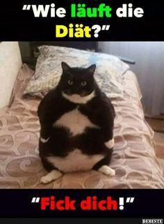 Wie läuft die Diät?