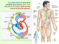 SISTEMUL LIMFATIC – Tratament Naturist Good To Know, Samurai, Cancer, Health Fitness, Spa, Medicine, Mariana, Fitness