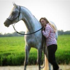 Kaisson & Christina #cncarabians. nl #uwarabier. nl  #Arabier  #arabian
