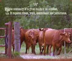 24de4a6d323 The King Ranch - one of the oldest and greatest of the Texas ranches. Texas