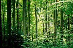 Selva Negra. Black Forest