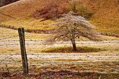 Valley Tree By Tumbhi Artist DENIS LEMAY