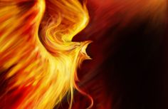 Phoenix Bird Pin Fire Wings Animals On Wallpaper with 1680x1050 ...