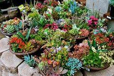 succulent dish gardens - Google Search