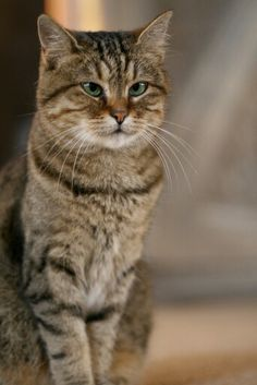 """Caminin mumunu yiyen kedi kör olur.""(atasözü)    Anlaşılan Gli'nin yemeği yarım kalmış."