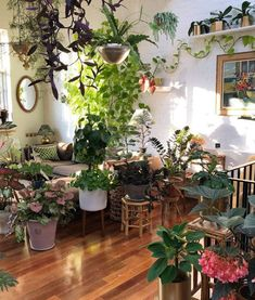 House Plants With Style