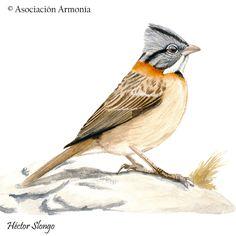 Visitá la entrada para saber más. Collars, Birds, Watercolor, Outline, Videos, Vintage Birds, Tattoos, Bird Template, Laminas Vintage