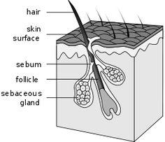 Nuleaf FUE Hair transplant Pune: Cost of Hair Transplantation: What we Charge at Nu...