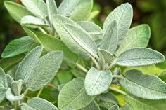 Plant Leaves, Skin Care, Plants, Gardening, Diet, Skincare Routine, Lawn And Garden, Skins Uk, Plant