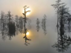 South Carolina, USA  changin' times… (by M t H)