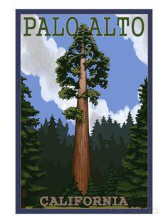 Palo Alto, California - California Redwoods Art Print