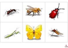 ) Insect Crafts, Nature Crafts, Preschool Themes, Bugs And Insects, Fun Learning, Education, Pictures, Garden, Dresses