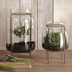 cool terrarium containers