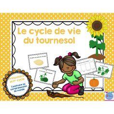 Cycle de vie Tournesol
