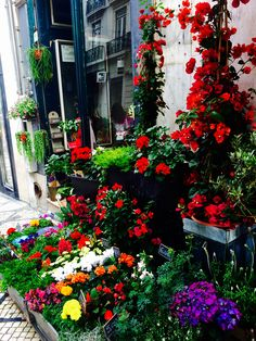 Florista no Chiado_Lisboa