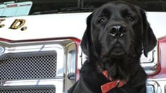 Firefighters are asking for help as an Upstate arson K-9 looks to be named to the America Humane Association Hero Dog Awards.