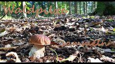 PILZE SAMMELN - Tolle Funde im Herbstwald 2019