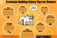 Bulldogs are super cute, but that cute factor unfortunately comes with more health concerns than most dogs have as well. If you're planning on getting a bulldog or already own one, make sure you are keeping your bully safe and doing all you can to set them up for a long, healthy life! Check the…