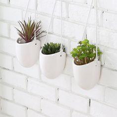 Indoor Wall Planters