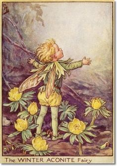 Cicely Mary Barker - Flower Fairies of the Winter - The Winter Aconite Fairy Painting