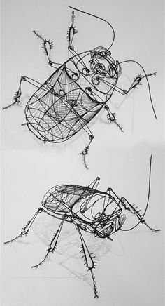 Wire cockroach art by Jonathan Chaillou. http://www.jonathanchaillou.com/gallery.html