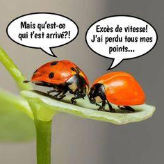 Attention, est une image drôle publiée le 5 Juin 2020 par villedieu.francois. Réagissez à cette image drole et d'actualité