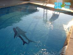 3D Pool Tile Great White Shark. Mosaic can be installed in any pool. Even if the pool is full of water.