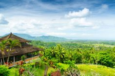 Green rice terraces in Bali, Indonesia #travel