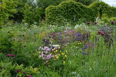 Noel's Garden Blog: The Garden at Montpelier Cottage in May