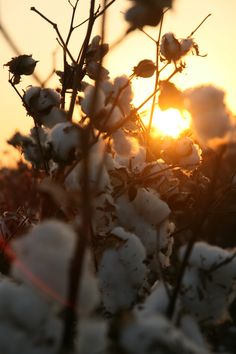 I grew up in a town surrounded by cotton fields, although I am only about 40 min. away from that town I miss taking a five min. drive to escape to those fields