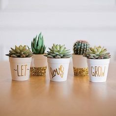 Cute Succulents in pretty gold pots. A cute arrangement of these hardy little plants. #succulents