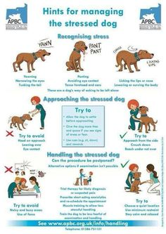 Hints for managing a stressed dog