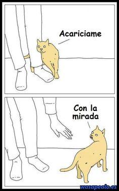 Gato Caprichoso