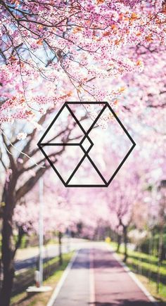 exo logo cherry blossom wallpaper