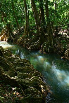 River Roots, Beautiful Indian River - Saint John, Dominica