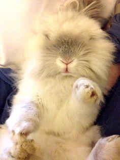 Puck! Pinners cute bunny!!!
