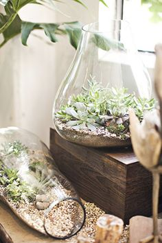 April showers are slowly sparking everything outdoors to life, but what about indoors? Even a busy working mom can make her house greener—and prettier—with these simply perfect plants.