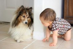 Sheltie and Baby....can it get any sweeter.....?.....:)