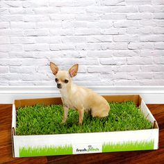 Indoor grass for puppy training - Must remember this in connection with Dr. Ian Dunbar's puppy training methods.