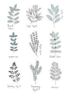 Botanical illustrations | Herbs