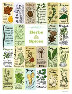 Your guide to herbs and spices, courtesy of our genius Art Director, Bambi Edlund.