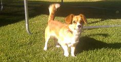 Hoping to adopt this little cutie pie :-) Photo of dog looking for a home